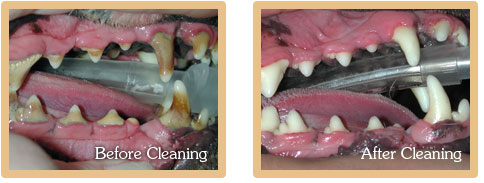 Before and After Dental Cleaning Photos