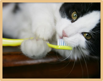 Home Dental Care for Pets