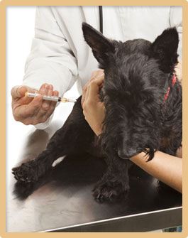 pet vaccinations in Chillicothe OH